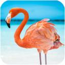 火烈鸟模拟器手机版v1.0.1最新版