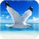 海鸥模拟器手机版